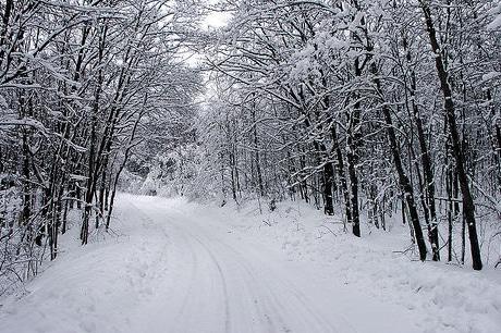 L'Europe devrait connaître un hiver exceptionnellement froid