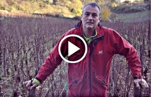 viticulteur_bio