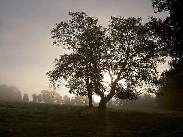 Brocélande brumes au petit matin. Photo Ernestine Nestor Flickr (cc)