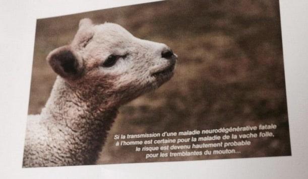 La maladie du mouton fou : vers une nouvelle catastrophe sanitaire et alimentaire ? [video]