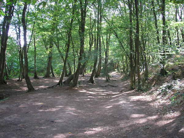 forêt_europe