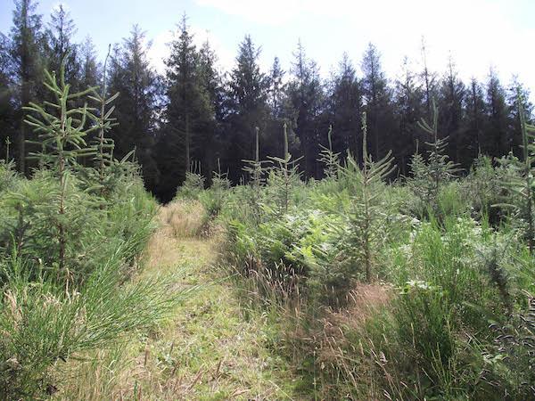 Breizh Forêt Bois : un nouvel appel à projets pour re(boiser) la forêt bretonne