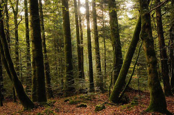forêt_beffou_bois_chauffage - copie