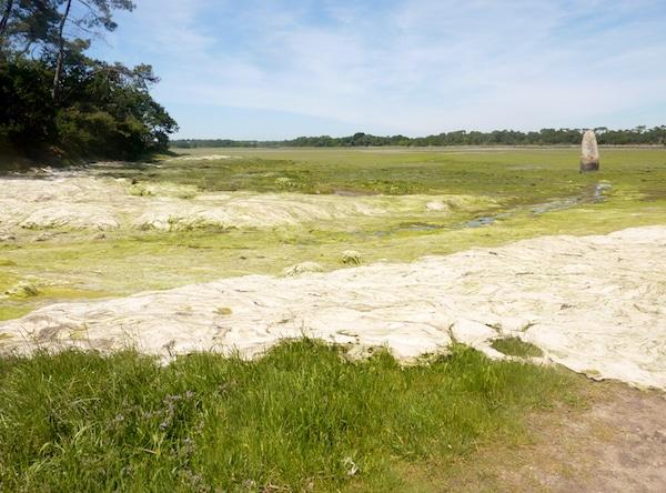 Algues vertes. Un recours gracieux contre le Préfet des Côtes d'Armor pour « écocide provoqué par les marées vertes »