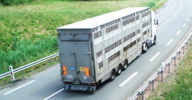 transport_animaux