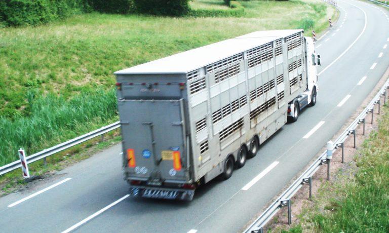 Rennes. Mobilisation contre le transport des animaux vivants ce lundi 29 août