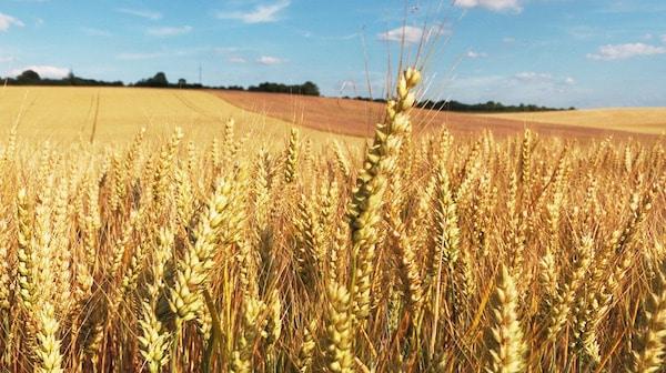 Agriculture et climat. La FAO (organisation des nations unies pour l'alimentation et l'agriculture) prône le changement.