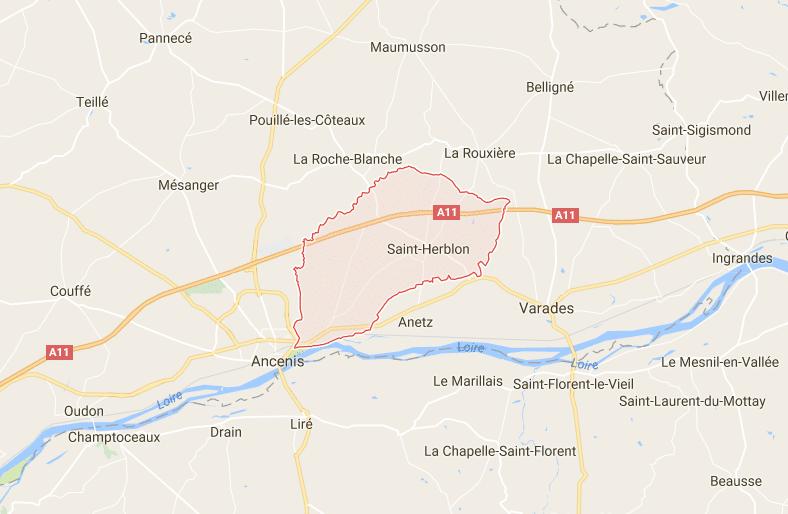 Vair-sur-Loire Cas d'influenza aviaire hautement pathogène sur un