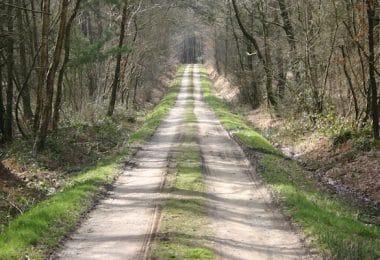 Sentier_de_la_foret_de_Loudéac