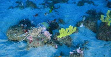 Amazon ReefCorais da Amazônia