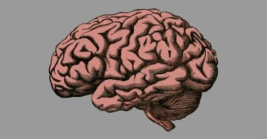 Intelligence artificielle Cerveau