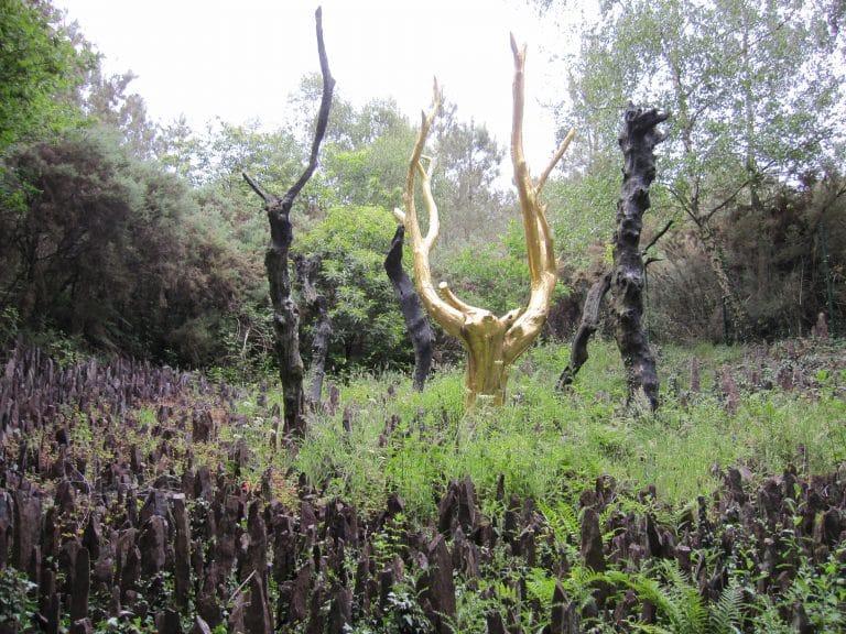 Danses, contes, veillées, musique : un stage de 3 jours en forêt de Brocéliande