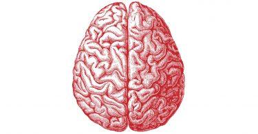 Gènes Intelligence Humaine QI