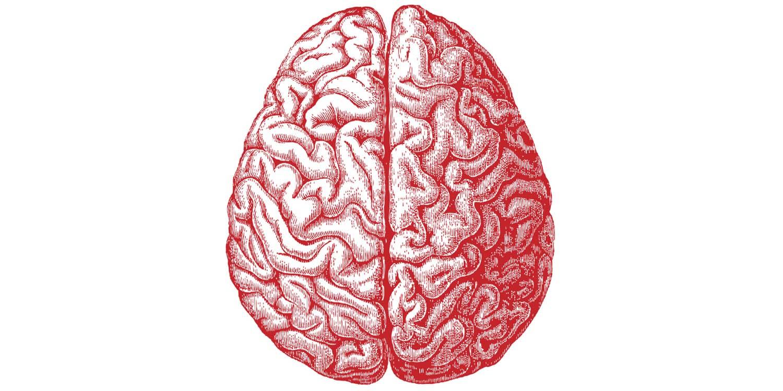 Gènes Intelligence Humaine QI Génétique Cerveau Cerveaux