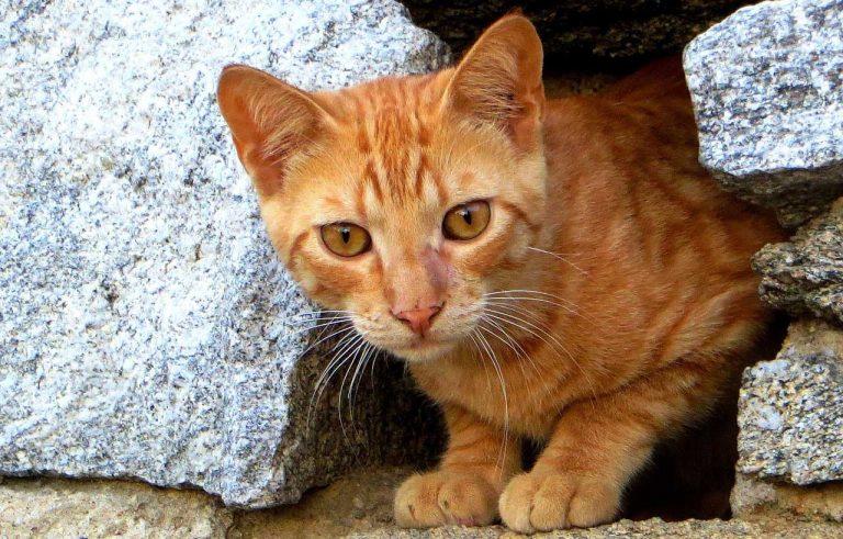 Nantes. Un chat torturé à mort découvert en plein centre-ville