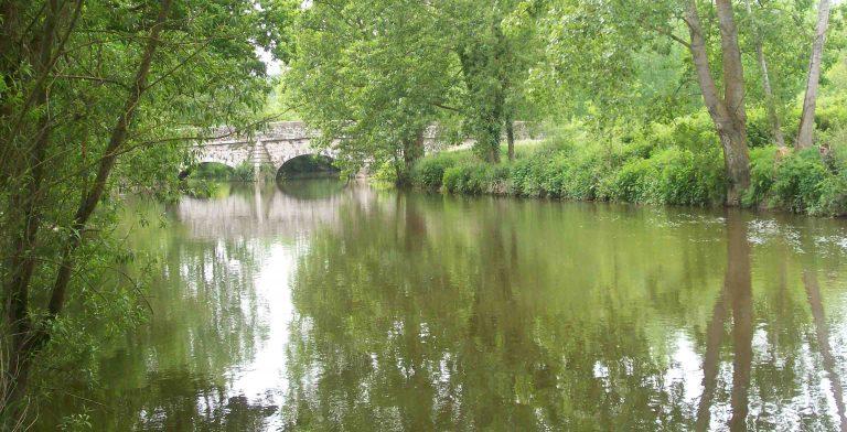 Rivière de la Seiche (35). Grave pollution, des centaines de poissons morts
