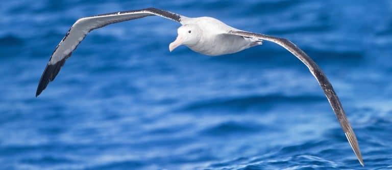 Des ingénieurs découvrent les raisons de la coloration des ailes d'oiseaux