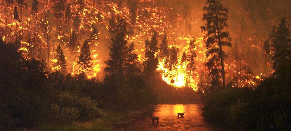 Forêts Incendie
