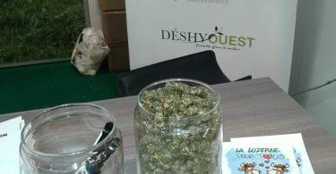 deshydouest