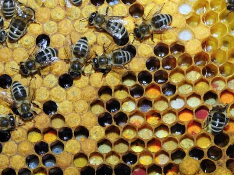 En plus du miel, les abeilles font des mathématiques