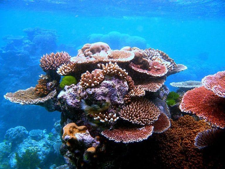 Pollution. L'Atlantique Nord s'acidifie rapidement, les coraux menacés