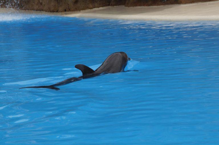 La coopération pêcheurs/scientifiques au coeur de la lutte contre les échouages de dauphins
