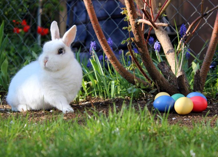 La fête de Pâques et du printemps : explications