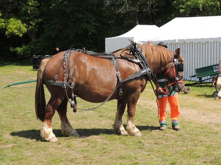 Hennebont. Congrès national des chevaux territoriaux, les 25-26 mai