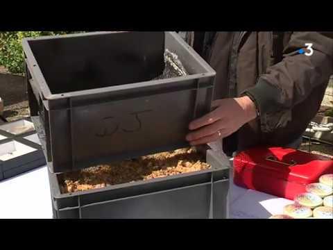 Pays de Morlaix : le piège à frelons asiatiques primé au concours Lépine