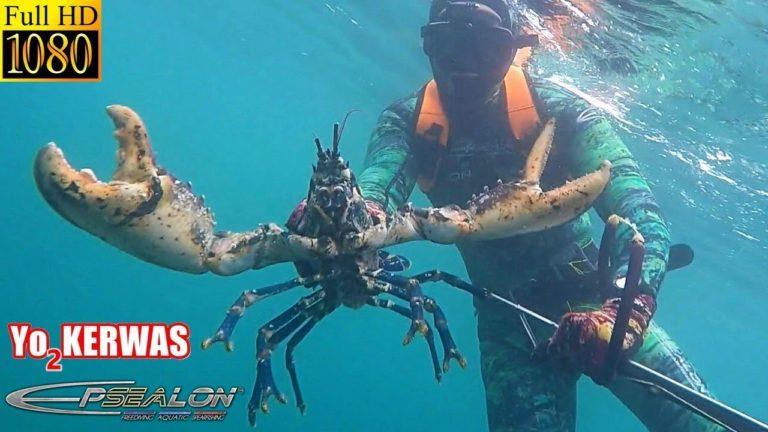 Pêche. Comment chasser le homard ? [Vidéo]