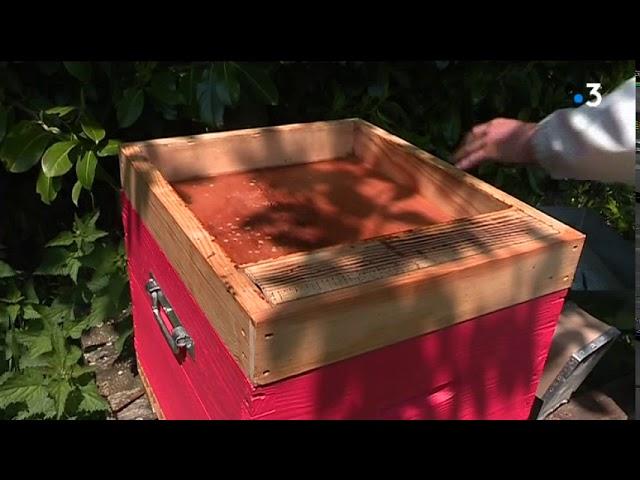 Mortalité importante des abeilles dans les Côtes d'Armor [Vidéo]