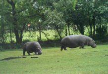 Planète_sauvage_-_Hippopotame