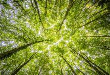 Forêts