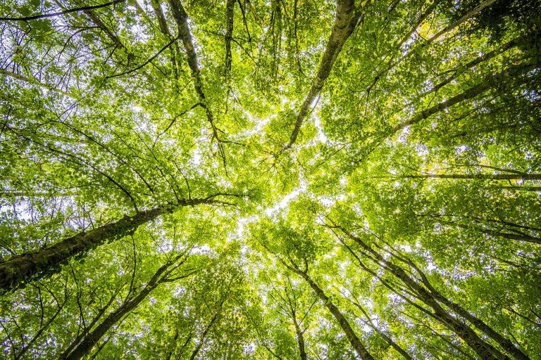 Forêts en danger. L'appel de Nantes pour planter un million d'arbres