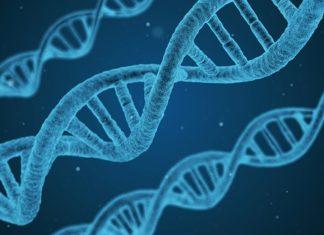 Les gènes influencent significativement les performances scolaires