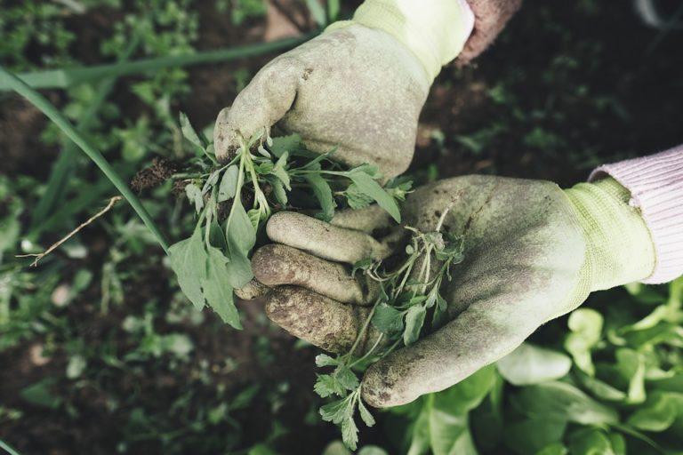 Lepotiron.fr : Le site où vous allez pouvoir troquer vos surplus de légumes