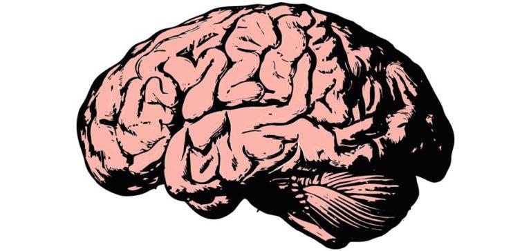 Sciences. La sélection naturelle moderne défavoriserait les gens intelligents