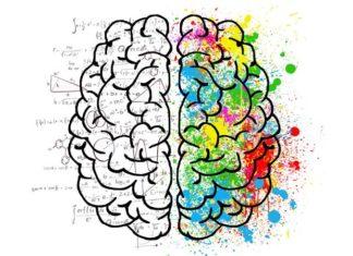 La taille du cerveau est largement génétique