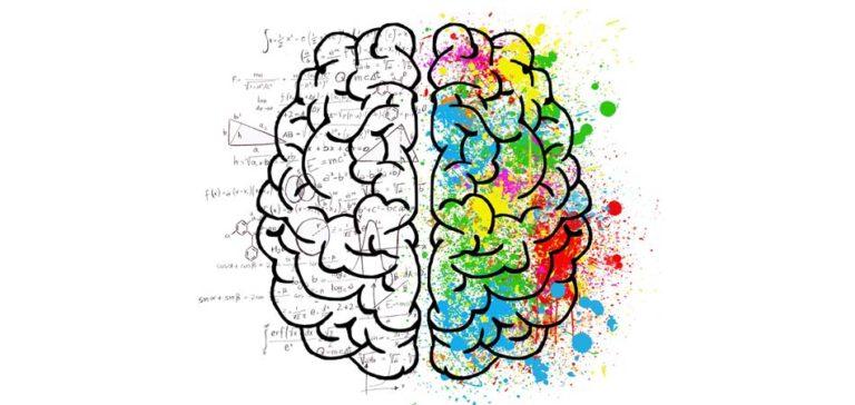 La taille du cerveau est largement génétique selon une étude scientifique