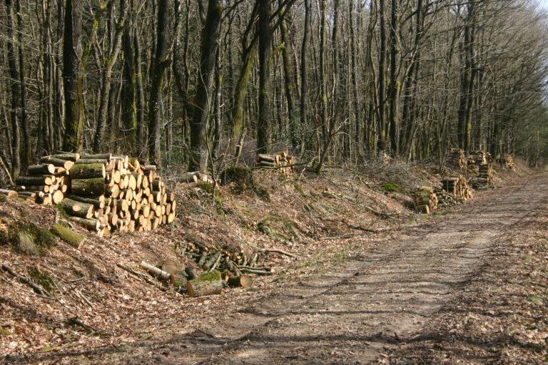 L'ONF publie un rapport sur la forêt publique en Bretagne