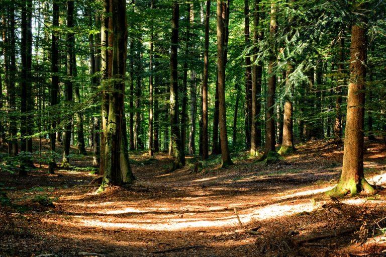 Sylvothérapie. Le bain de forêt, une promenade de santé ! [Vidéo]