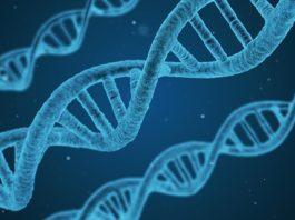 Génétique. Vers une prévalence de l'inné sur l'acquis ?