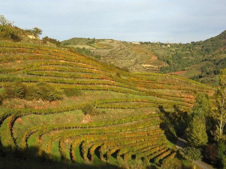 Marcillac : l'archétype du vin de lieu