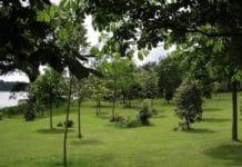 jardin_memoire