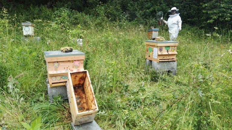 Apiculture. Un nouvel appel à parrainage pour les ruchers pédagogiques