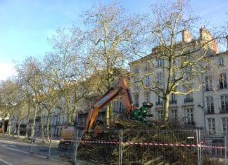 arbres_nantes