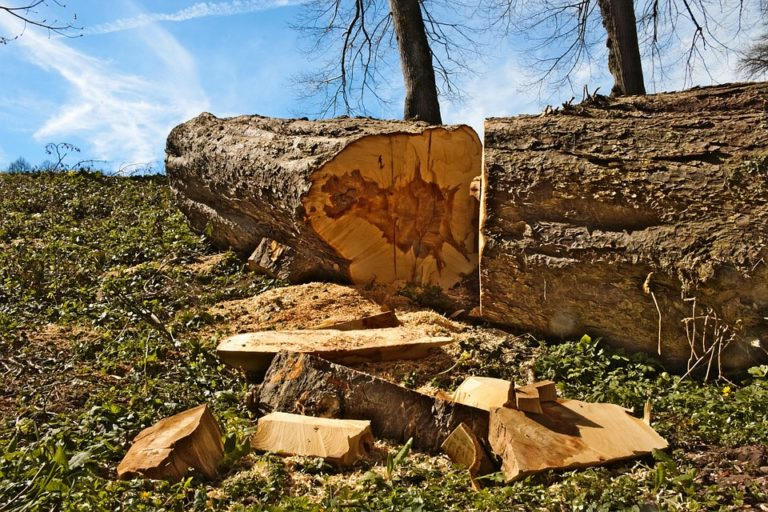 Sautron. Pour faire un cimetière paysager, la municipalité fait abattre huit chênes