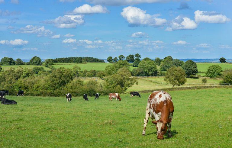 Airbnb et l'AMRF s'associent pour développer le tourisme dans la France rurale