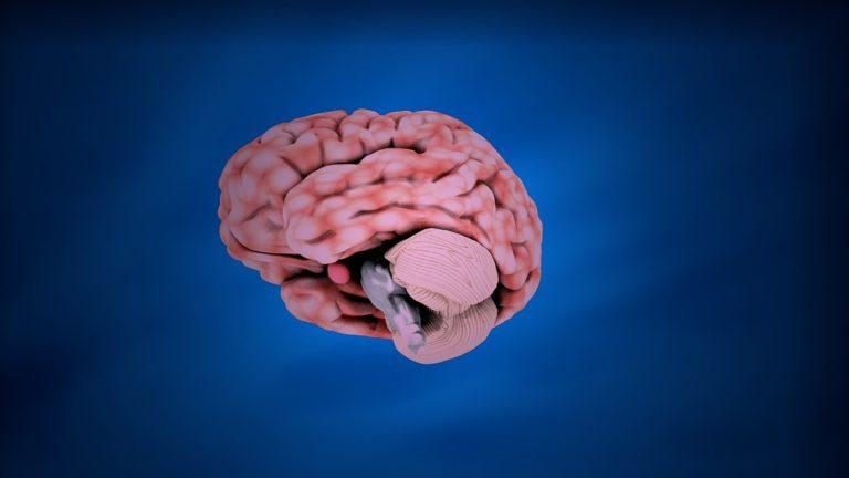 La semaine du cerveau, pour financer la recherche sur une pièce maîtresse du corps humain