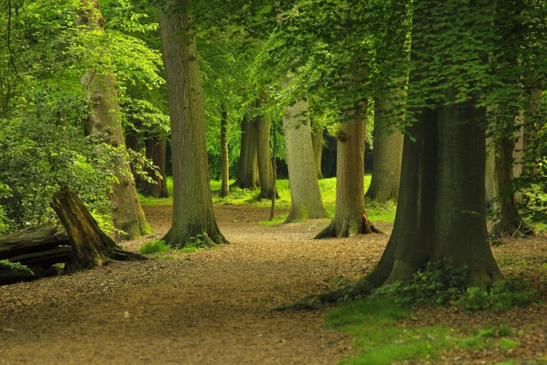 Des arbres sur «liste rouge » : 40 % des espèces menacées de disparition en Europe